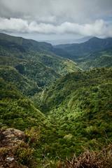 Mauritius Reise Natur Wald