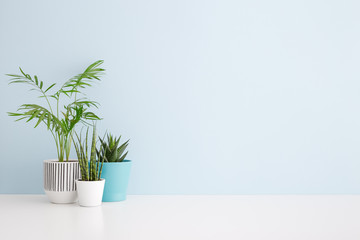 Plants on a shelf mock up.