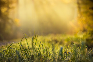 Summer meadow, green grass field with rays of warm sunlight, nature background concept