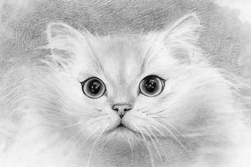 fluffy white cat. pencil drawing. wool