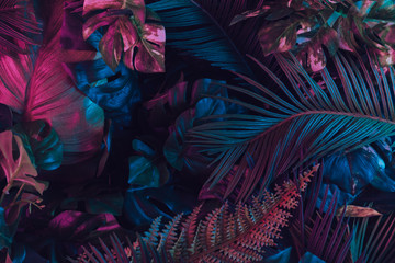 Creative fluorescent color layout made of tropical leaves. Flat lay neon colors. Nature concept. Fotoväggar