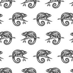 Chameleon hand drown illustration sketch seamless pattern