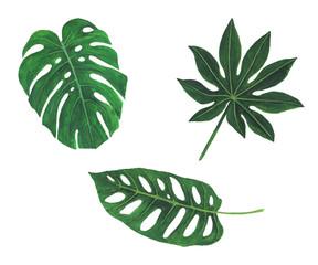 Tropical leaves watercolor illustration botany set of monstera