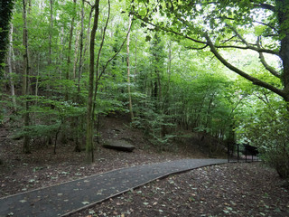 Pathway through green forest in the daytime.