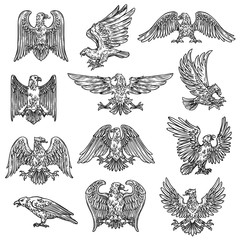 Heraldic sketch gothic eagle hawk icons