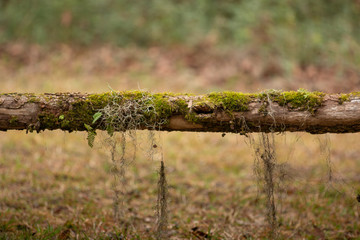 limb of tree horizontal blurred background