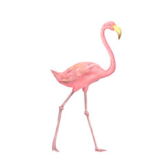 Pink cute flamingo watercolor character digital clip art beauty bird tropical summer set illusration on white background