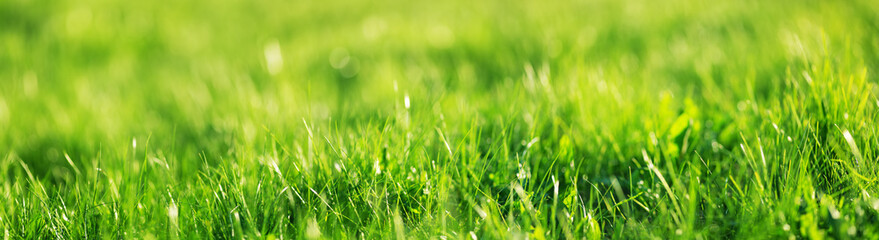 Tuinposter Gras Fresh green grass background