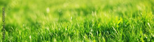 Wall mural Fresh green grass background