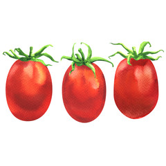 Three fresh juicy red cherry tomatoes in line, organic food ingredient, close up, isolated, hand drawn watercolor illustration on white background