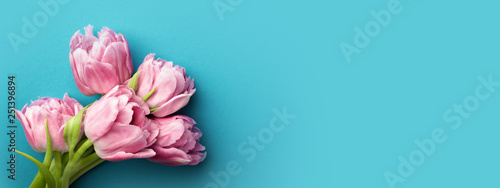 Pink tulips on turquoise background with copy space. Top view, banner for website.