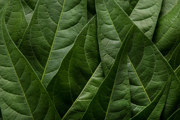 Background of green leafs