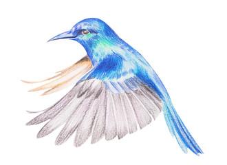 Figure hummingbirds with colored pencils. Handwork