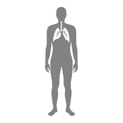 Vector isolated illustration of lung