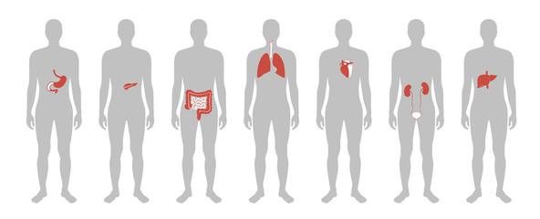 Human internal organs vector