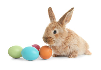 Adorable furry Easter bunny and colorful eggs on white background