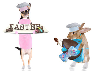 Cute chihuahua dog chef have bake easter letters and cute bunny have bake big easter egg