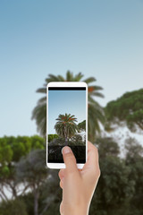 A man is making a photo of palm tree on a background of blue sky on a mobile phone