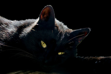 black cat with yellow eyes, black background