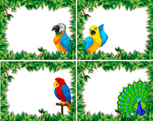 Set of bird frame
