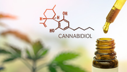 CBD in pipette against Hemp plant and chemical molecule