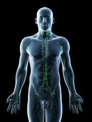 3d rendered illustration of a mans lymphatic system