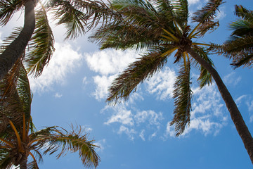 palm trees against blue sky clouds wind breezing beach paradise