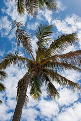 palm tree and blue sky feel summer breezing holiday  Australia