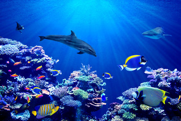 Wall Mural - Vibrant background of colorful coral reef with beautiful marinefish, Whale shark, Manta ray and Dolphin