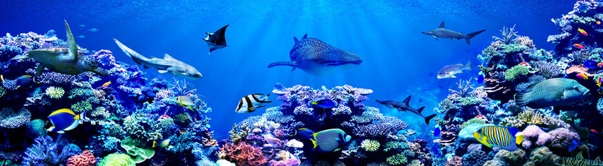 Panorama background of beautiful coral reef with marine tropical fish. Whale shark, Hammerhead...