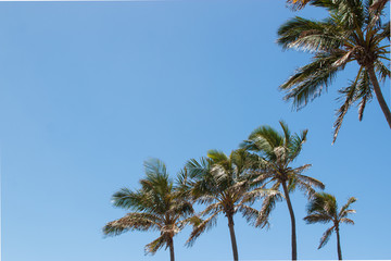 palm trees and blue sky copy space