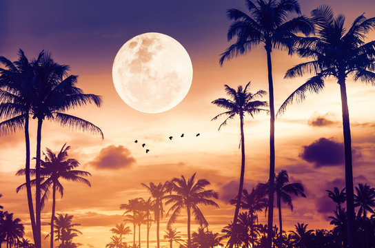 Tropical night. Full moon and palm tree birds fly abstract background.