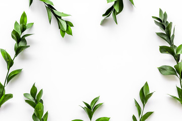 Spring background with young green plants and leaves on white background top view copy space frame