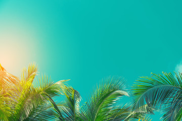 Wall Mural - Copy space of tropical palm tree with sun light on sky background.