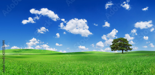Wall mural Idyll, panoramic landscape, lonely tree among green fields