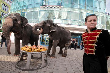 Performing elephants eat in front of a circus during public feeding in Simferopol