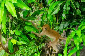 piccoli macachi giocano saltano sull'albero