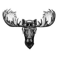 Animal wearing aviator helmet with glasses. Vector picture. Moose, elk Hand drawn illustration for tattoo, emblem, badge, logo, patch, t-shirt