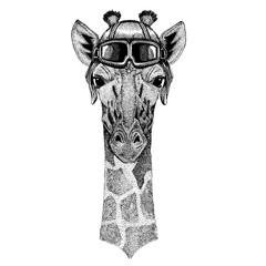Animal wearing aviator helmet with glasses. Vector picture. Camelopard, giraffe Hand drawn image for tattoo, emblem, badge, logo patch