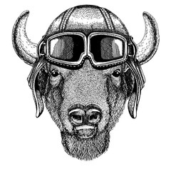 Animal wearing aviator helmet with glasses. Vector picture. Buffalo, bison,ox, bull Hand drawn image for tattoo, emblem, badge, logo, patch