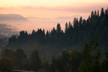 Foto op Canvas Ochtendstond met mist Breathtaking morning dawn in Carpathian mountains. Mountain and forest under sunrise sky. Beautiful wildlife landscape in the morning.