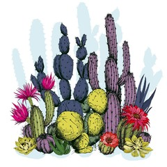 Colorful cactus plants with flowers. Hand drawn vector on white background.