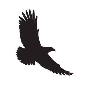Black eagle silhouette on a white background. Vector illustration