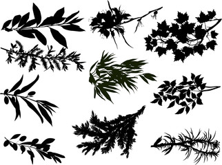ten black branches isolated on white