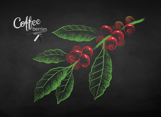 Chalked sketch of coffee branch with berries