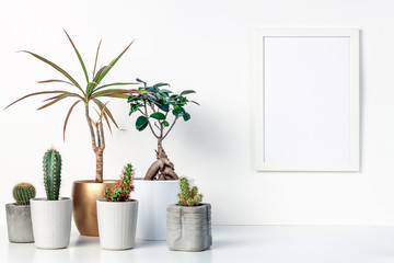 White shelf at home. Decoration with cactuses, bonsai and palm trees. Concrete, ceramic and gold flowerpots. White empty wall with a mockup frame. Copy space. Space for text or graphics