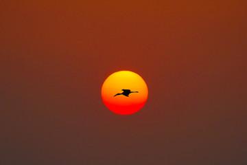 a bird on the sunset
