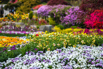 "Landscape photo of a wide variety of pretty and colourful flower beds in the ""Garden of Morning Calm"" in South Korea."