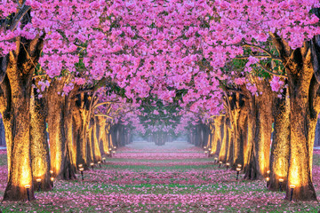 Wall Mural - Rows of Beautiful pink flowers trees.