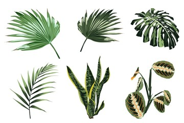 Tropical plants, leaves and palms set. Exotic illustrations, floral elements isolated, Hawaiian bouquet for greeting card.